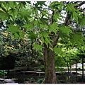 尾山神社-25.JPG