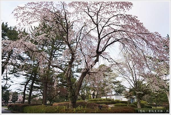 榴岡公園-2.JPG