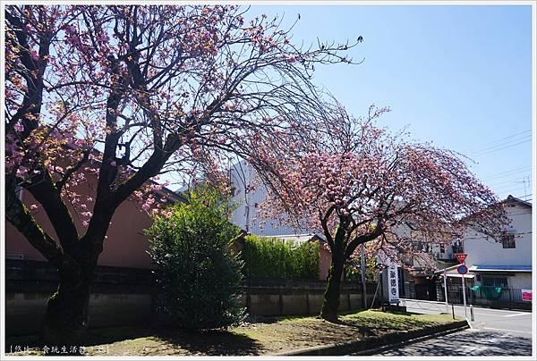 豪德寺-4-參道.JPG