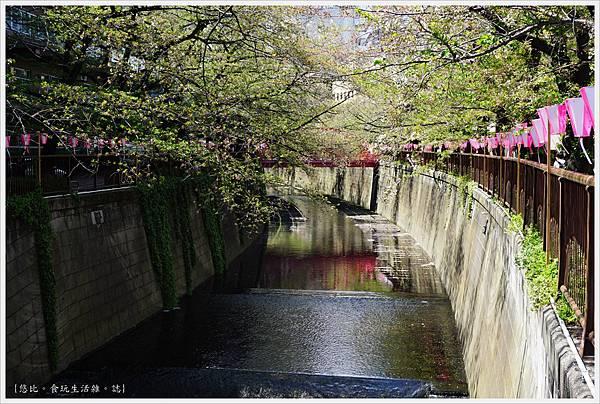 目黑川-6-櫻花.JPG