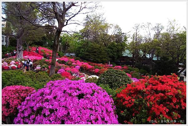 根津神社杜鵑-177.jpg