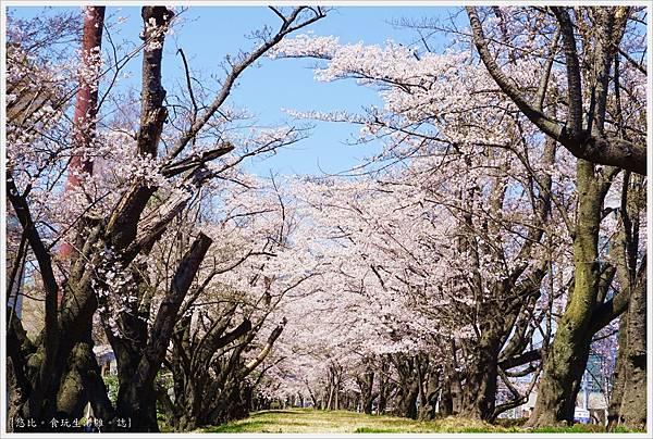 開成山公園-2.JPG