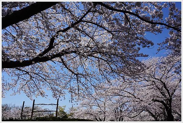 開成山公園-37.JPG