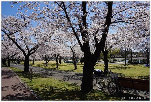 開成山公園-51.JPG