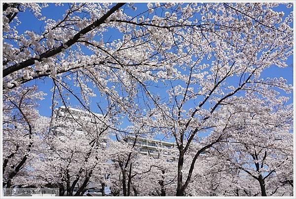開成山公園-58.JPG