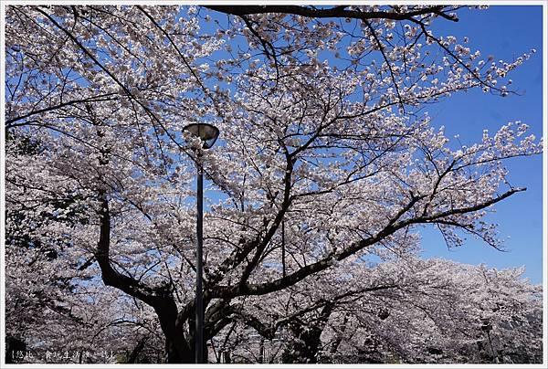 開成山公園-131.JPG