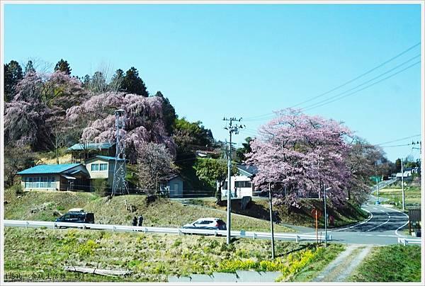 三春-6-沿路.JPG