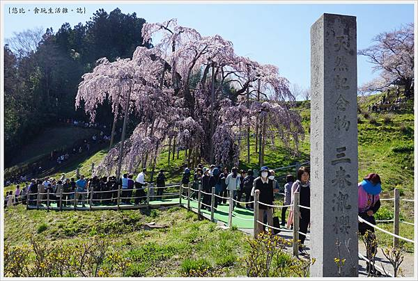 三春瀧櫻-33.JPG