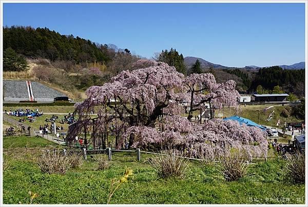 三春瀧櫻-46.JPG