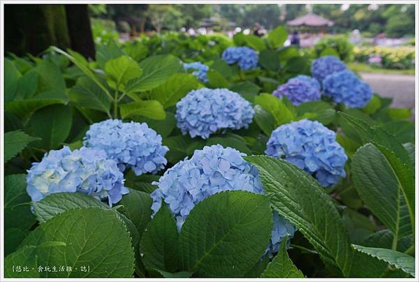 城北花園-84.JPG
