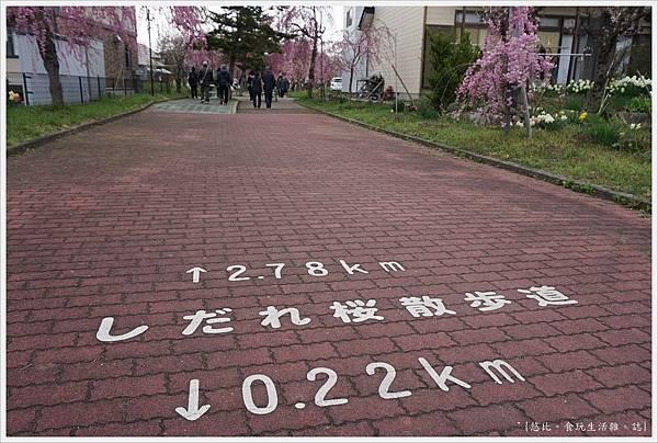 喜多方-23-舊日中線記念自行車步道枝垂櫻.JPG