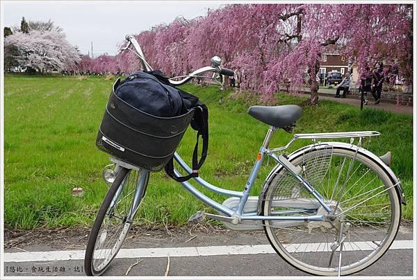 喜多方-34-舊日中線記念自行車步道枝垂櫻.JPG