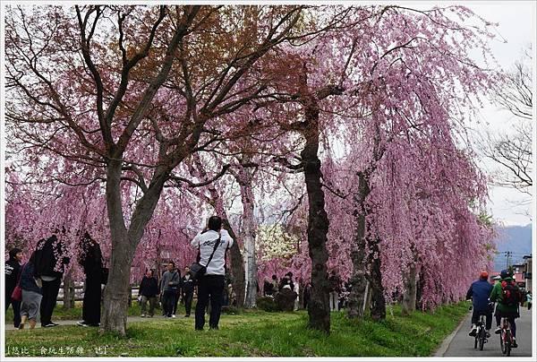 喜多方-50-舊日中線記念自行車步道枝垂櫻.JPG