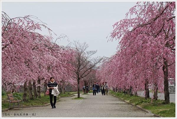 喜多方-86-舊日中線記念自行車步道枝垂櫻.JPG