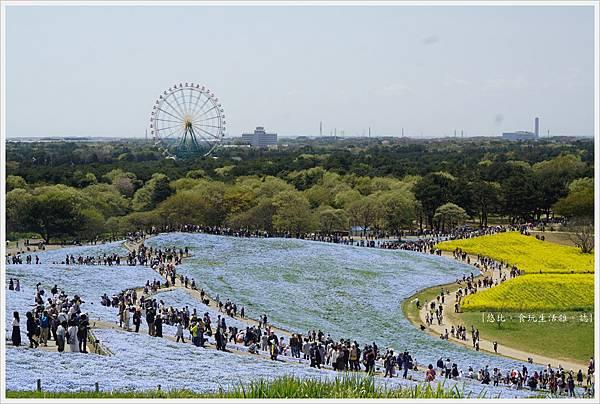 國營日立海濱公園-24.JPG