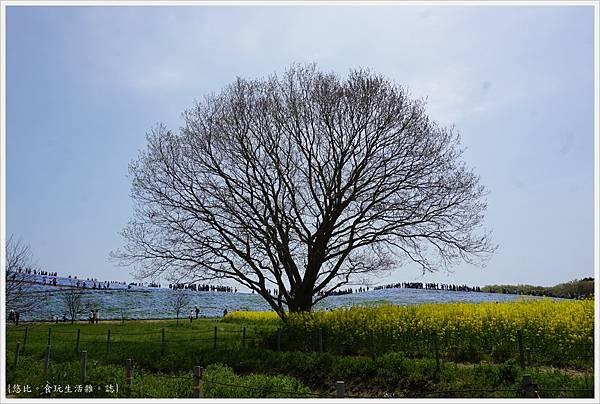 國營日立海濱公園-28.JPG