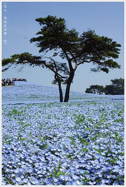 國營日立海濱公園-53.JPG