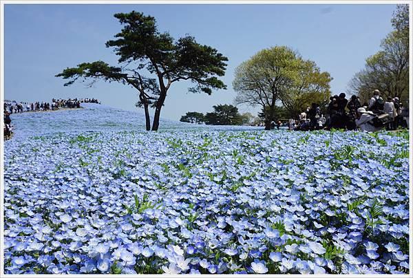 國營日立海濱公園-55.JPG