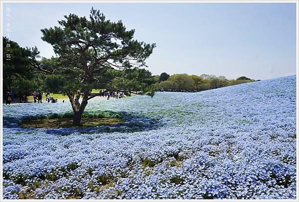 國營日立海濱公園-60.JPG