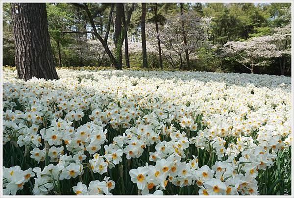 國營日立海濱公園-79.JPG