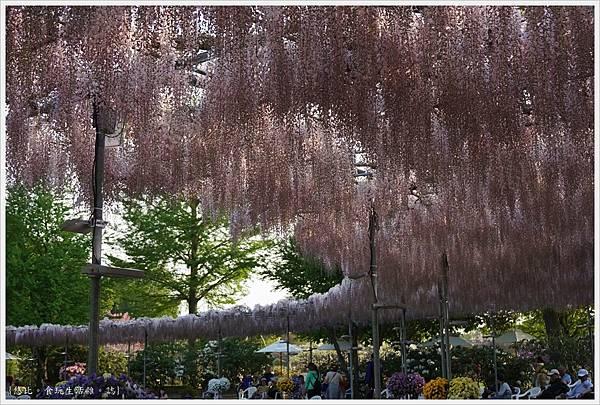 足利花卉公園-10.JPG
