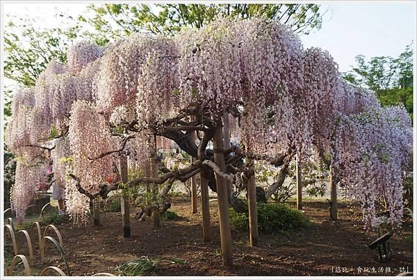 足利花卉公園-11.JPG