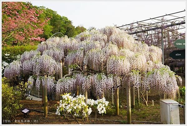 足利花卉公園-33.JPG