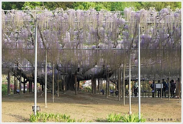 足利花卉公園-37.JPG