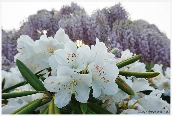 足利花卉公園-43.JPG