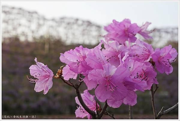 足利花卉公園-49.JPG