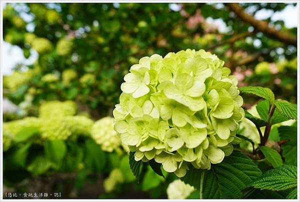 足利花卉公園-51.JPG