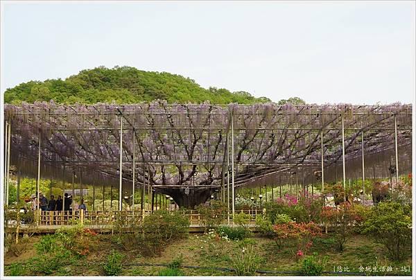 足利花卉公園-54.JPG