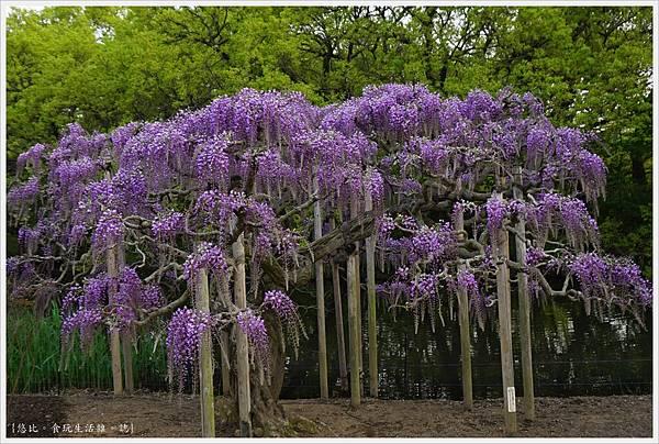 足利花卉公園-61.JPG