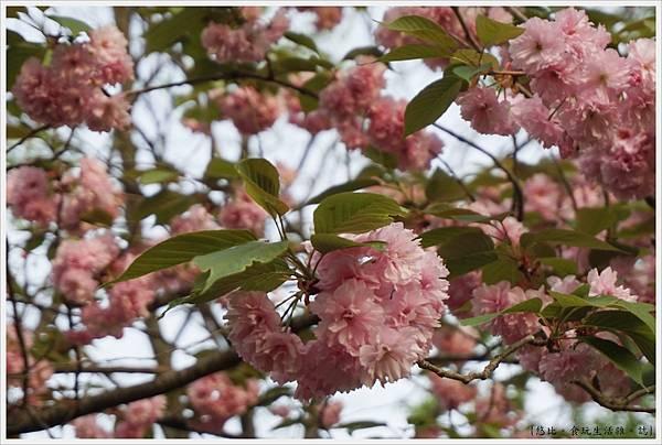 足利花卉公園65.JPG