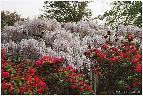 足利花卉公園-66.JPG