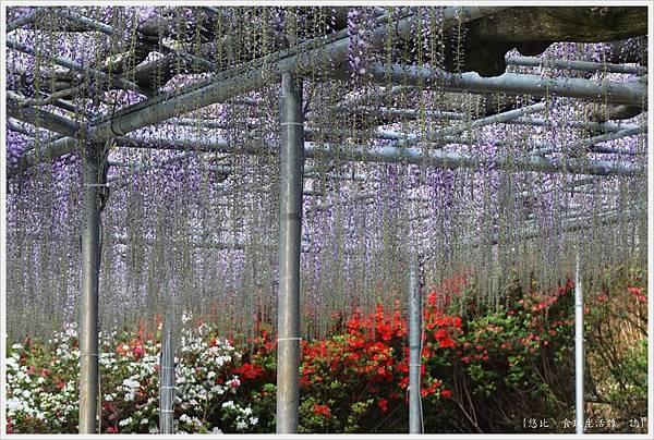 足利花卉公園-69.JPG