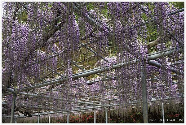 足利花卉公園-68.JPG