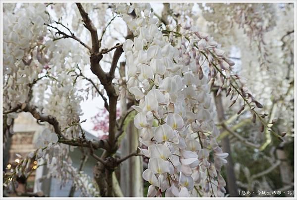 足利花卉公園-82.JPG