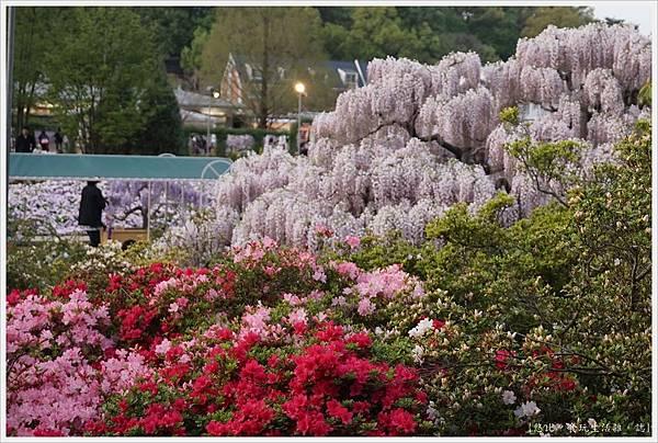 足利花卉公園-84.JPG