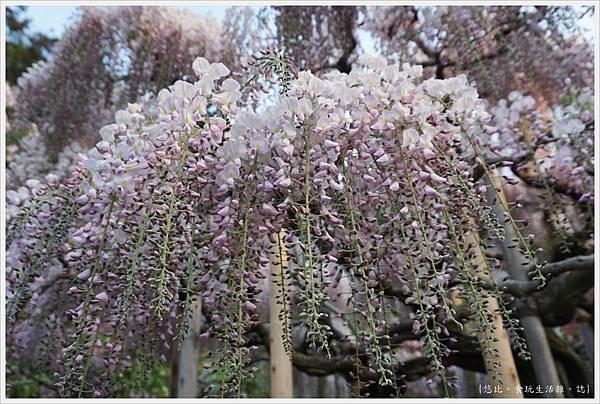 足利花卉公園-88.JPG