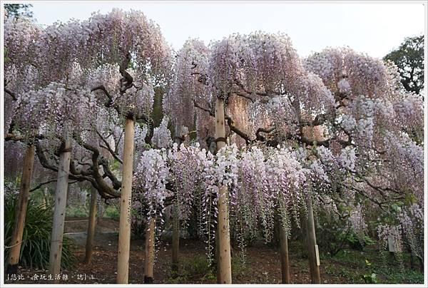 足利花卉公園-87.JPG