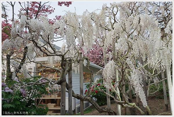 足利花卉公園-83.JPG