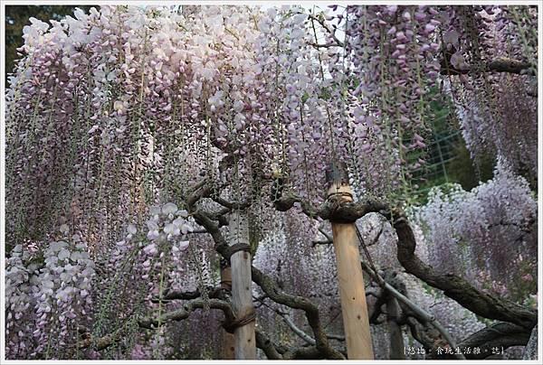 足利花卉公園-89.JPG