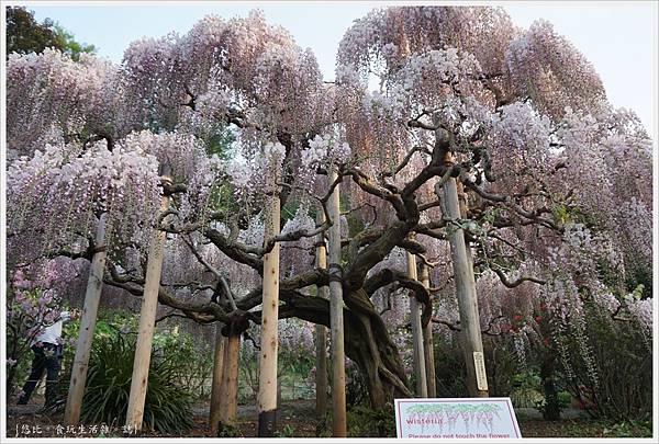 足利花卉公園-92.JPG