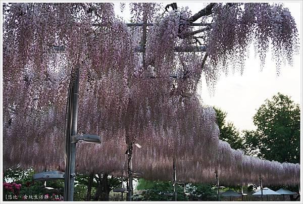 足利花卉公園-98.JPG