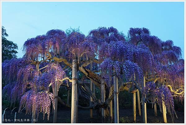 足利花卉公園-111.JPG