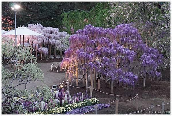 足利花卉公園-112.JPG