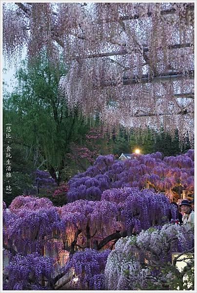 足利花卉公園-113.JPG