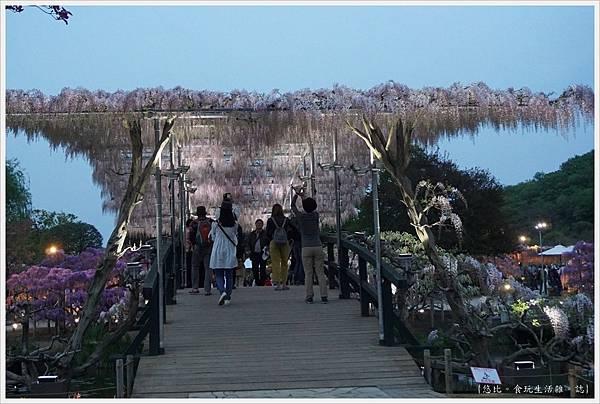 足利花卉公園-116.JPG
