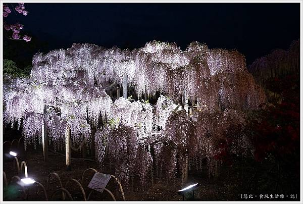 足利花卉公園-123.JPG